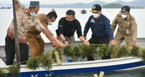 Gubernur Ansar Panen Rumput Laut di Pulau Jaga Karimun